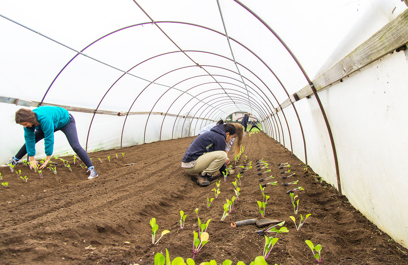 Students planting rows of plants in a greenhouse.