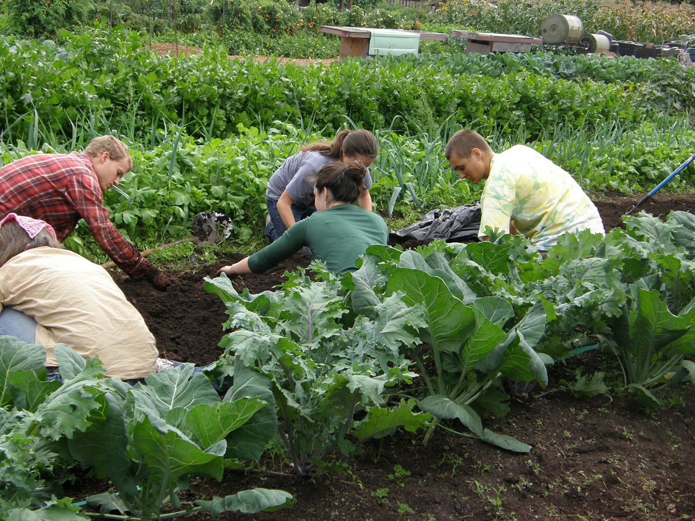 Students serve by helping in a community garden.